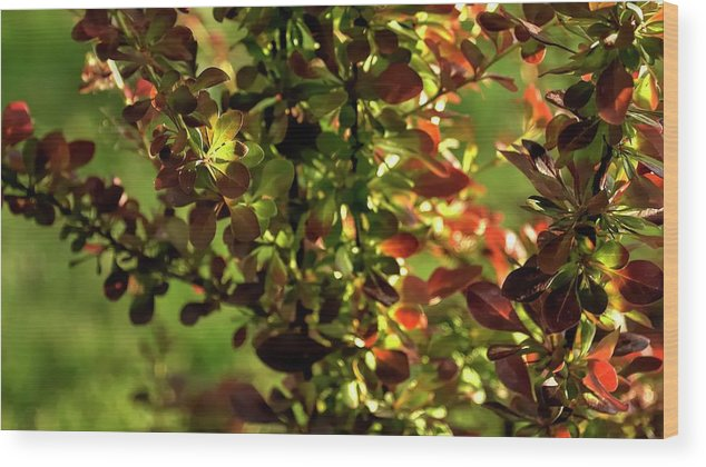 Willamette Wood Print featuring the photograph Green Leaf Red Leaf by Jerry Sodorff
