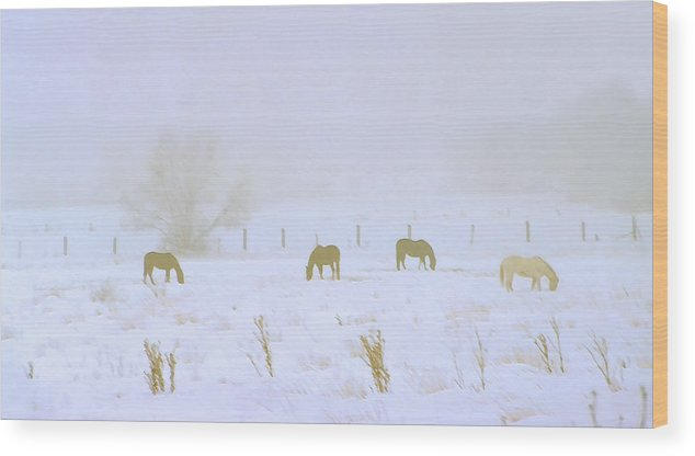 Fog; Mist; Foggy; Misty; Landscapes; Scenery; Scenic; Atmospheric; Snow; Snowy; Winter; Wintry; Cold; Seasons; Seasonal; Weather; Horses; Animals; Farming; Agricultural; Farms; Rural; Country; Farm Animals; Grazing; Grazing Horses; Field; Four Wood Print featuring the photograph Horses Grazing In A Field Of Snow And Fog by Steve Ohlsen