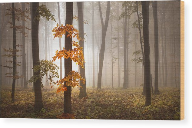 Landscape Wood Print featuring the photograph In November Light by Franz Schumacher