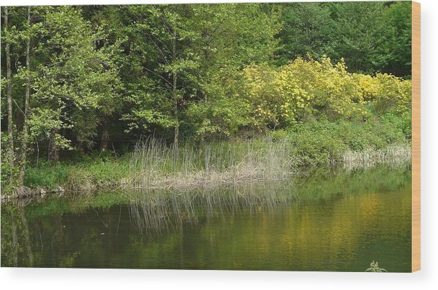 Spring Wood Print featuring the photograph In Peace With Nature by Attila Balazs