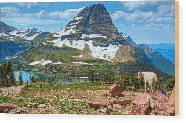Kid Mountain Goat Wood Print featuring the photograph Kid And The Bear In Widescape by James Anderson