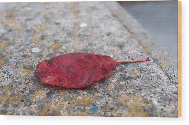 Leaf Wood Print featuring the photograph Red Leaf by Kenneth Freyer
