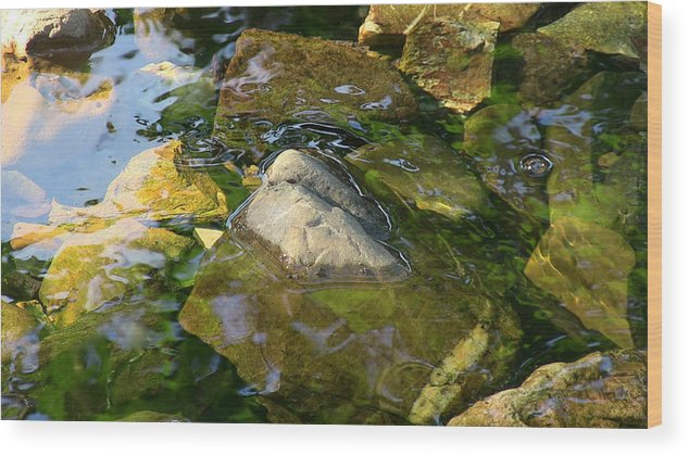 Rock Camo Wood Print featuring the photograph Rock Camo by Darin Baker