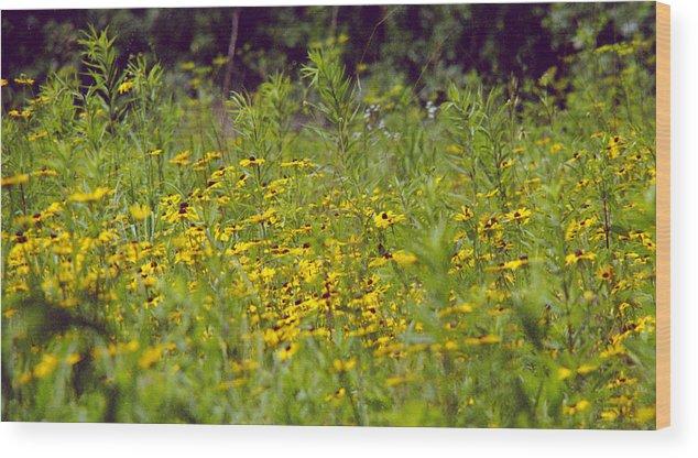 Nature Wood Print featuring the photograph Susans In A Green Field by Randy Oberg