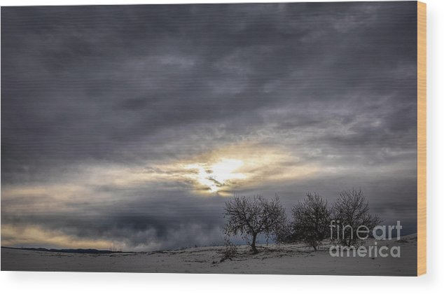 White Sands Wood Print featuring the photograph Three Trees by Randy Waln