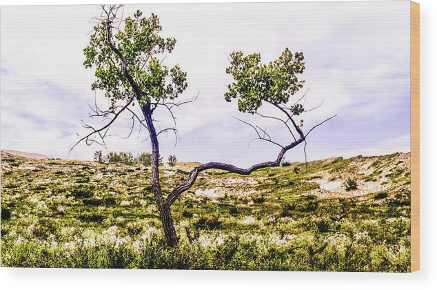 Tree Wood Print featuring the photograph Two Branches by Keith Kadwell