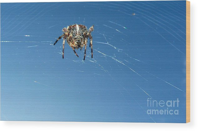 Spider Wood Print featuring the photograph Waiting by Larry Keahey