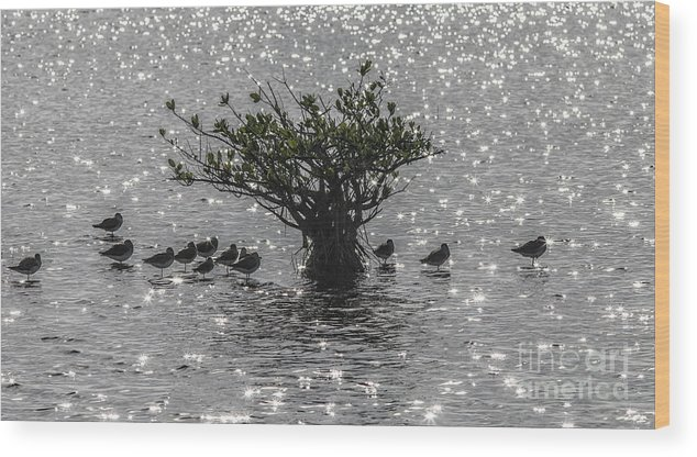 The Mangrove Wood Print featuring the photograph The Mangrove by Felix Lai