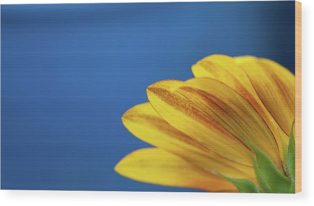 Clear Sky Wood Print featuring the photograph Yellow Flower by Www.asif-ali.com