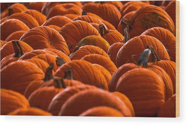 Agriculture Wood Print featuring the photograph Pumpkin Patch by Brian Stevens