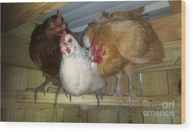 Bird Wood Print featuring the photograph Chick Trio by Donna Brown