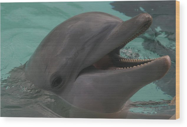 Dolphin Wood Print featuring the photograph Dolphin by Dervent Wiltshire