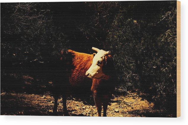 Cow Wood Print featuring the photograph Lady Cow by Jessica Shelton