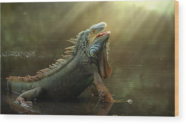 Lizard Wood Print featuring the photograph Morning Light by Fahmi Bhs