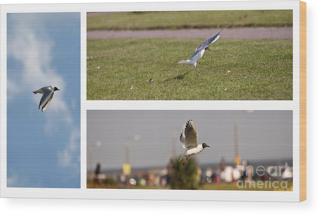 Seagull; Gull; Bird; Flying; Flight; Nature; Beach; Coast Wood Print featuring the photograph Seagulls by Lesley Rigg