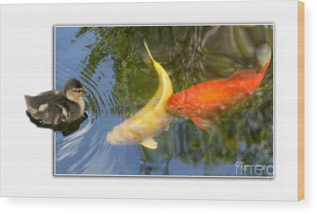 Duck Wood Print featuring the photograph Who Are You? by Mariarosa Rockefeller