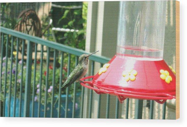 Hummingbird Wood Print featuring the photograph Hummingbird II by Madelyn May