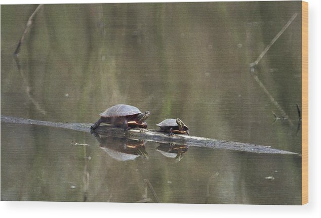 Turtle Wood Print featuring the photograph 070406-68 by Mike Davis
