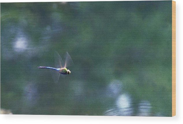Dragonfly Wood Print featuring the photograph 070406-80 by Mike Davis