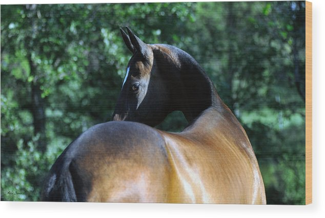 Horses Wood Print featuring the photograph Arama by Artur Baboev