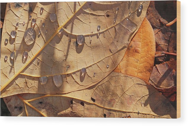 Fall Wood Print featuring the photograph Fall Leaves And Dew 5 2017 by Mary Bedy