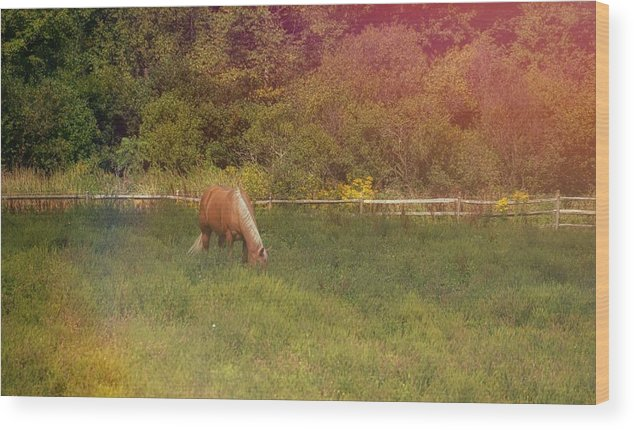 Horse Wood Print featuring the photograph Grazing Golden by Dressage Design
