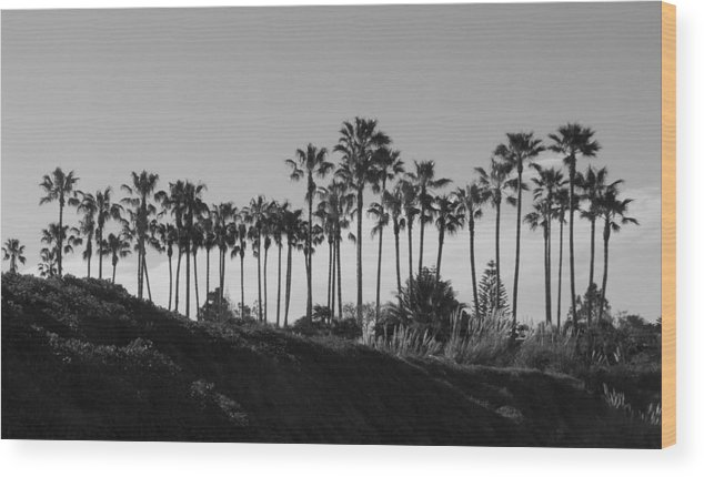 Landscapes Wood Print featuring the photograph Palms by Shari Chavira