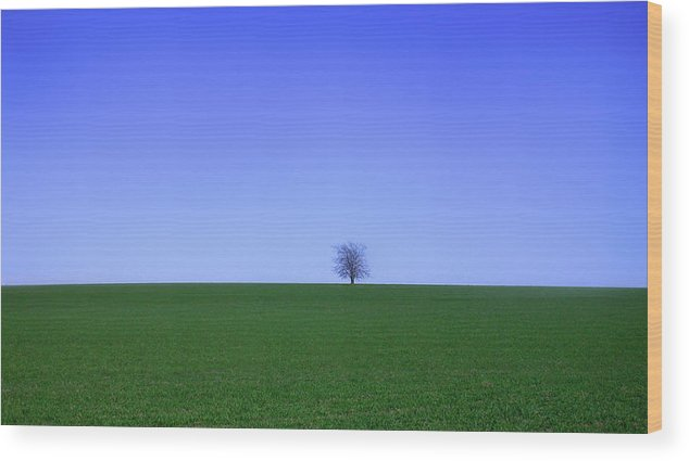 Tree Wood Print featuring the photograph Tree by Steven Corie