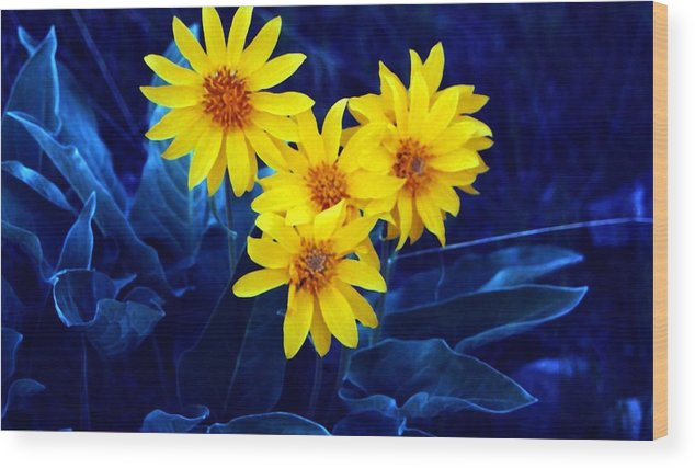 Sunflowers Wood Print featuring the photograph Wild Sunflowers by Tiffany Vest