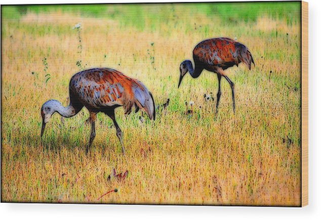 Bird Wood Print featuring the photograph Sandhill Cranes by Kathy Sampson