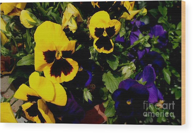 Flowers Wood Print featuring the photograph Love Flowers by Baljit Chadha