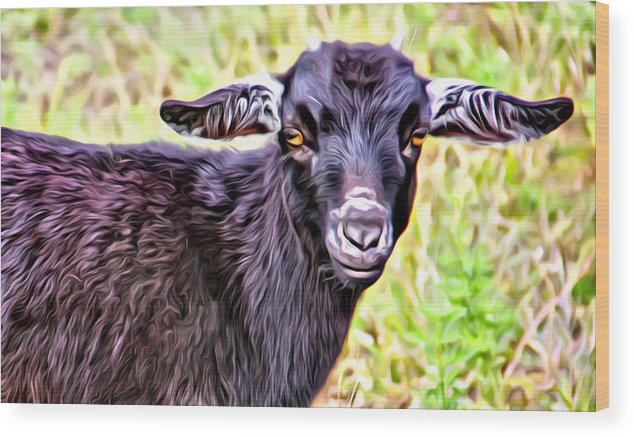 Baby Goat Wood Print featuring the photograph Baby Billy by Alice Gipson