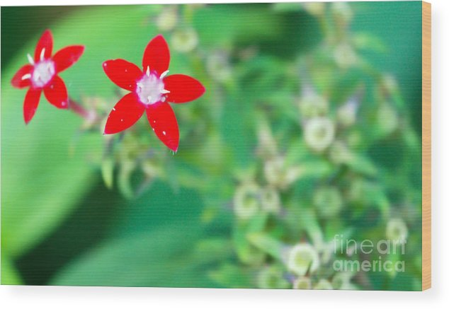 Red Flower Wood Print featuring the photograph Red Star by Optical Playground By MP Ray