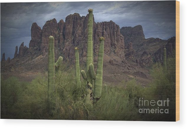 Desert Wood Print featuring the photograph Superstitious Cactus II by Richard Fernandez