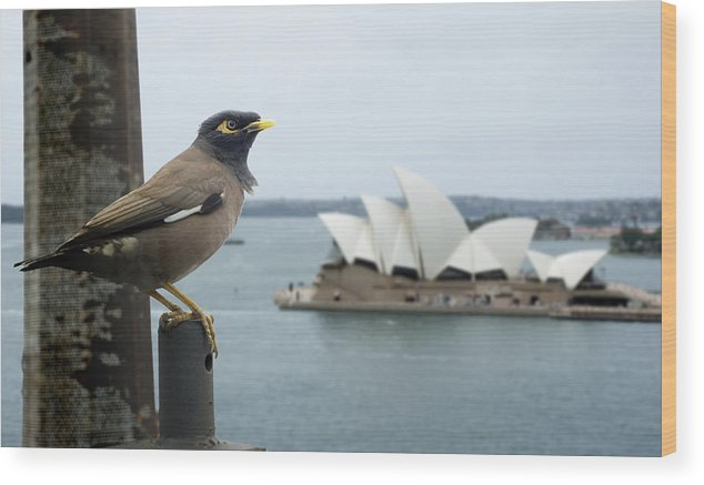 Opera House Wood Print featuring the photograph Sydney by Geert Mantel