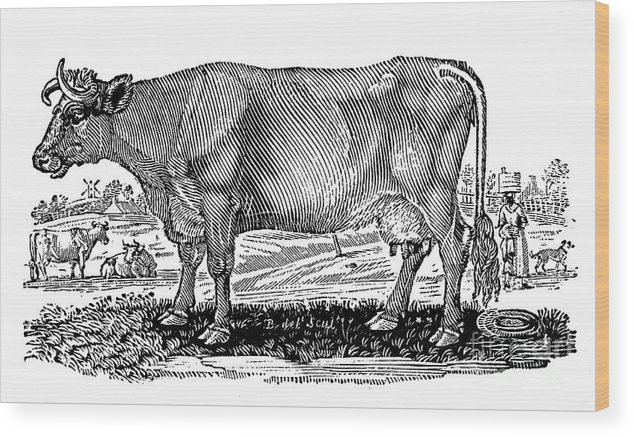 1790 Wood Print featuring the photograph Cattle by Granger