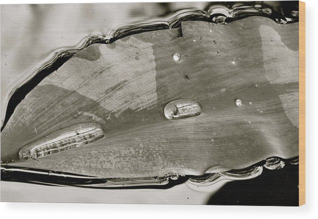 Leaves Wood Print featuring the photograph Balance by Barbara Palmer