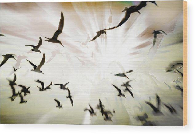 Digital Photography Wood Print featuring the photograph Birds Explosion by Tony Wood