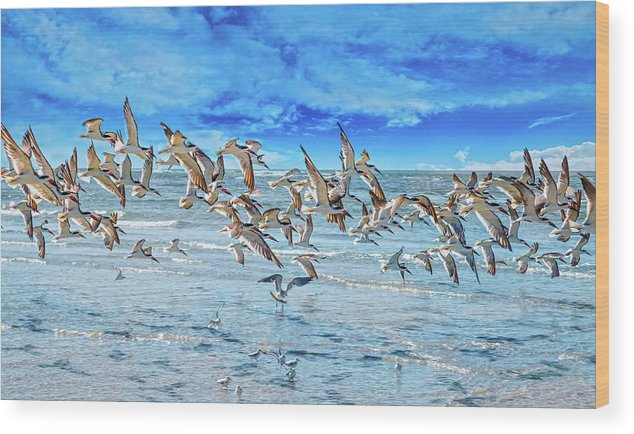 Topsail Wood Print featuring the photograph Topsail Skimmers by Betsy Knapp
