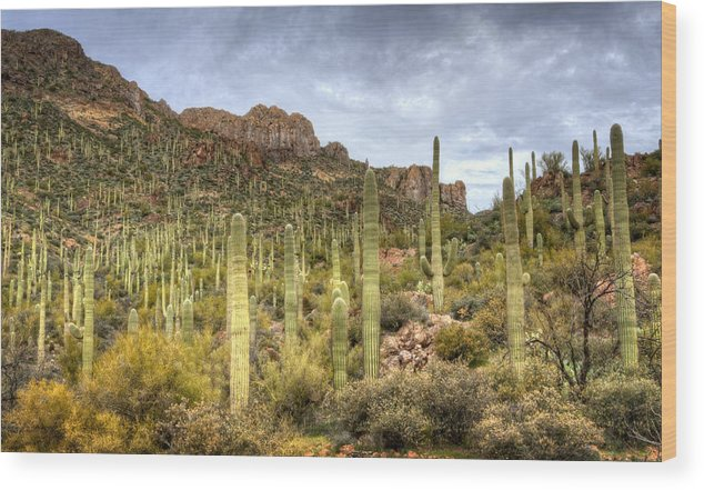 Arizona Wood Print featuring the photograph A Forest Of Saguaros by Saija Lehtonen