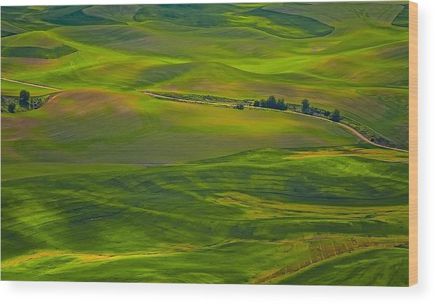 Greenscape Wood Print featuring the photograph Palouse Greens by Philip Kuntz