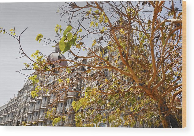 Landscape Wood Print featuring the photograph Pigeon Tree At The Taj by Kantilal Patel
