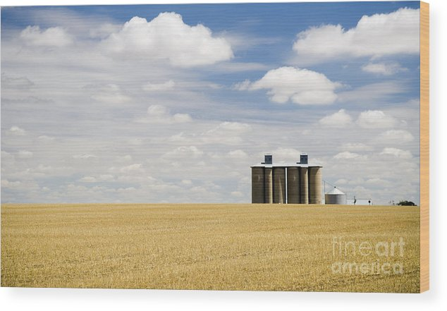 Agriculture Wood Print featuring the photograph Wheat Fields by Tim Hester