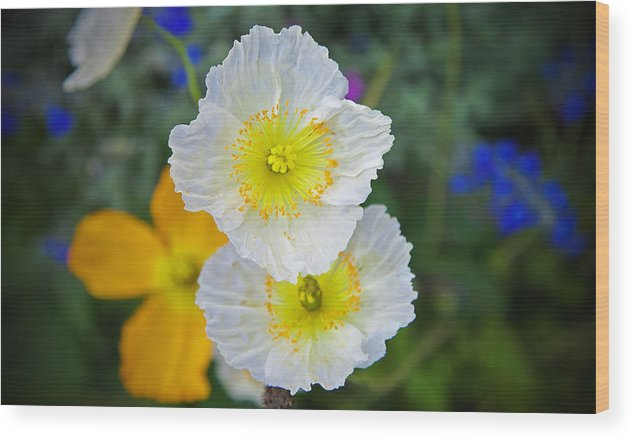 Flowers Wood Print featuring the photograph White Spring by Joe Fernandez