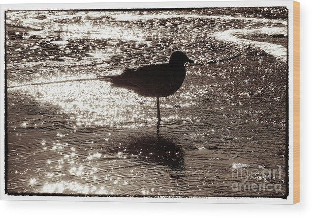 Beach Wood Print featuring the photograph Gull In Silver Tidal Pool by Jim Moore