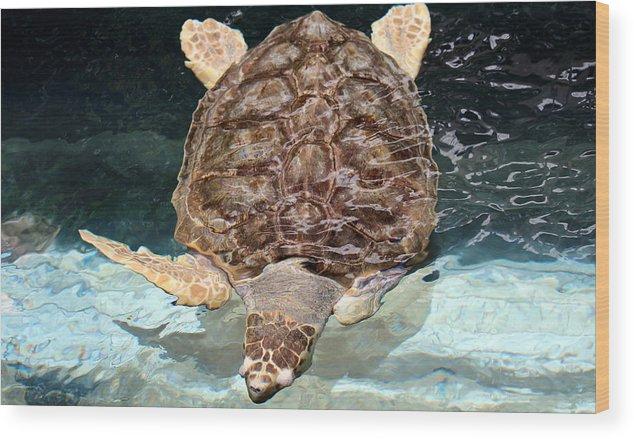 Turtle Wood Print featuring the photograph Loggerhead Sea Turtle by Elizabeth Hart