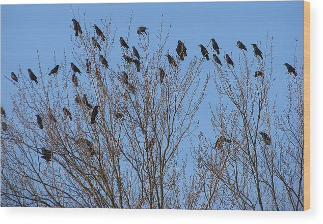 Bird Wood Print featuring the photograph Birds In The Trees by Kathy Roncarati