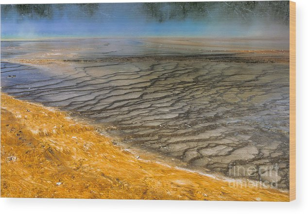 Yellowstone Wood Print featuring the photograph Grand Prismatic Runoff by Sandra Bronstein