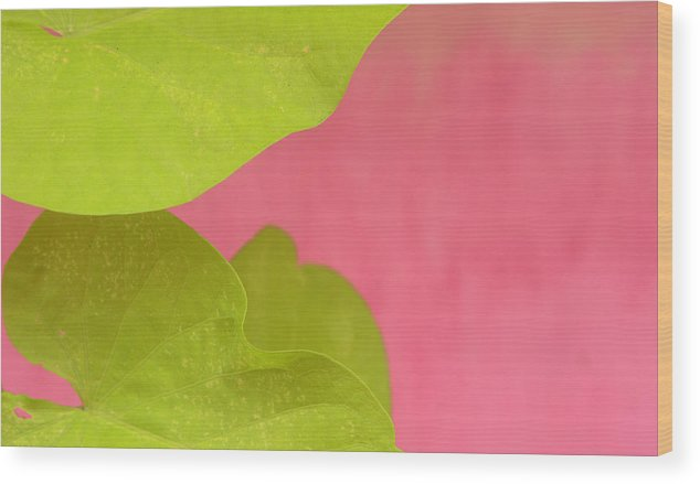 Color. Abstract Wood Print featuring the photograph Green On Pink 1 by Art Ferrier