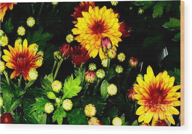 Photo Wood Print featuring the photograph Pretty Petals by Marsha Heiken
